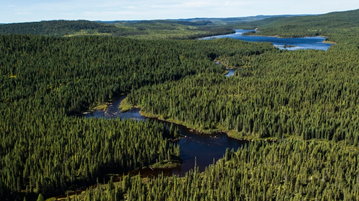 what_is_the_canadian_boreal_forest